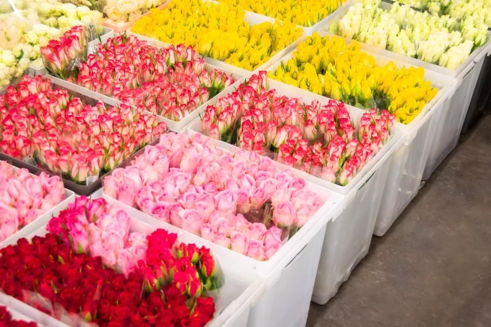 bins of flowers