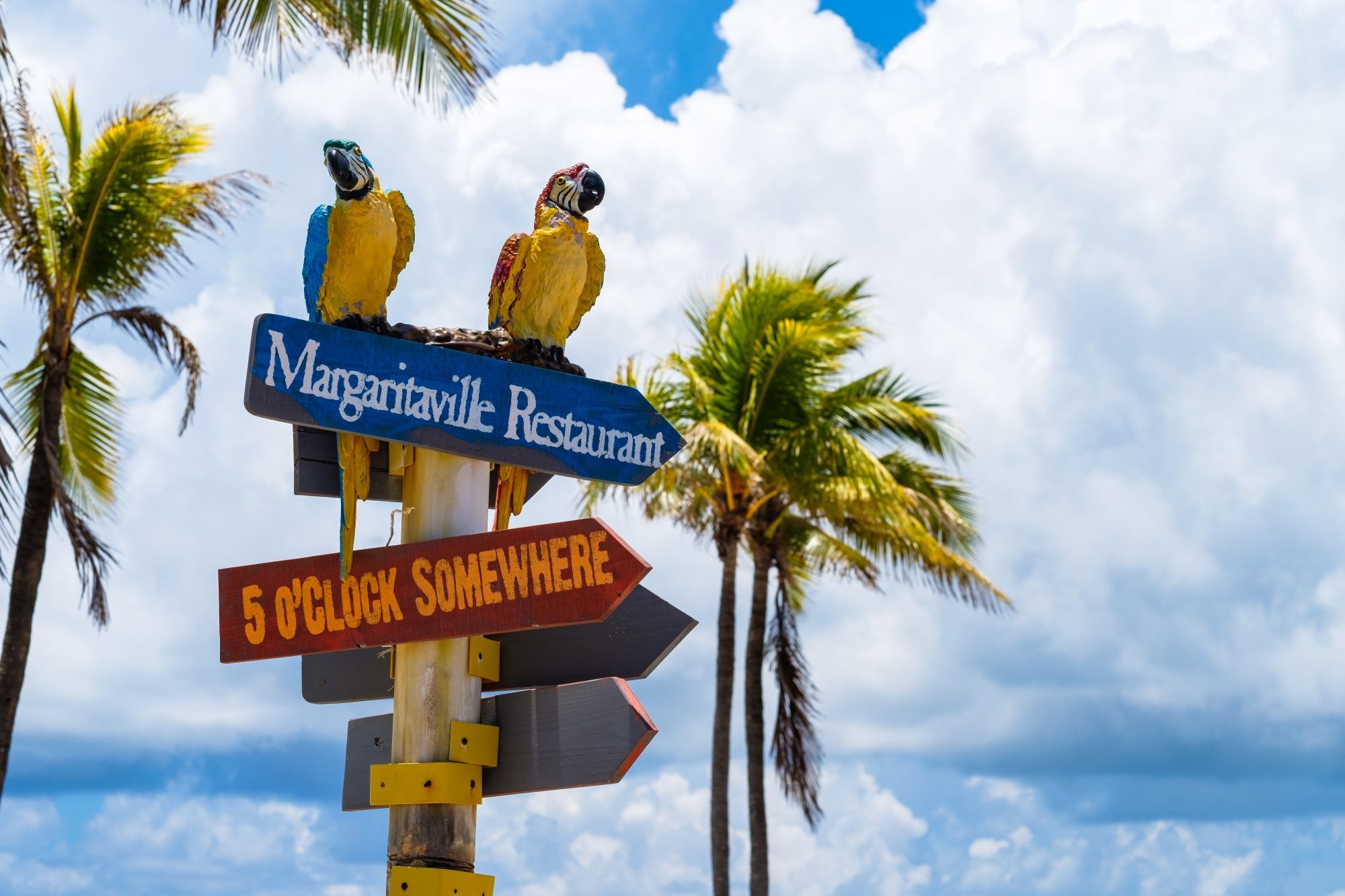margaritaville sign and parrots