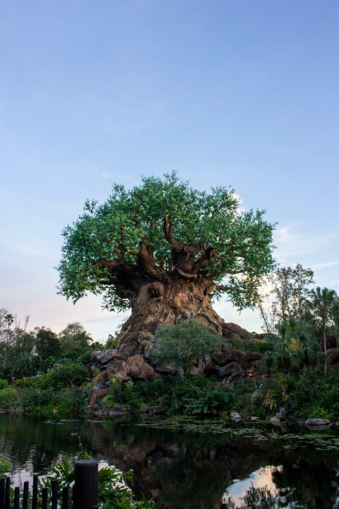 tree of life at disney world
