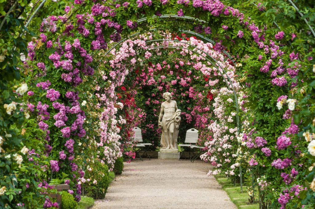 rose arch in a beautiful garden