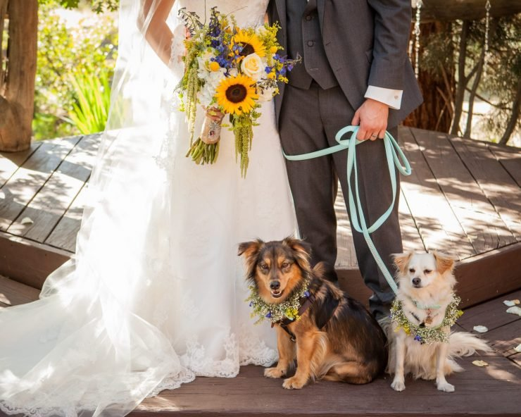 wedding dogs with bride and groom